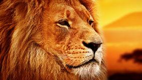 belső erő oroszlán portré
